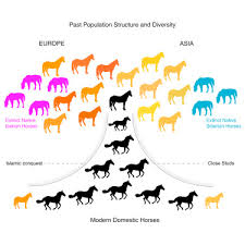 Horse Speed Index Chart Tracking Five Millennia Of Horse Management With Extensive
