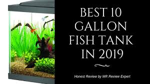 10 Gallon Fish Tank Buyers Guide By Mr Review Expert