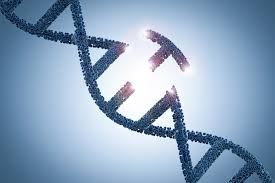 Genome Editing Better Genome Editing Developed New Method Not Only Gives The User