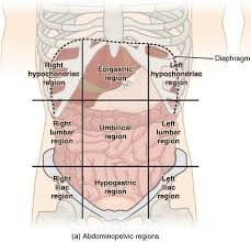 The division into four quadrants allows the localisation of pain and tenderness, scars, lumps, and other items of interest, narrowing in on which organs and tissues may be involved. Abdominal Surface Anatomy Radiology Reference Article Radiopaedia Org