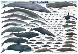 40 Complete Whales Of The World Chart