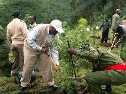 Image result for reforestation