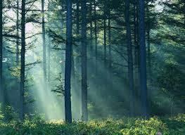 Животный и растительный мир Евразии описание обитателей фото  Растительный мир Евразии также разнообразен Значительную территорию материка занимают хвойные широколиственные экваториальные и переменно влажные леса