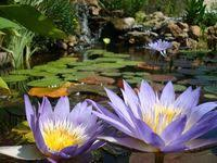 12 Best Build A Pond! images | Pond, Building a pond, Backyard
