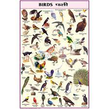 Hindi Birds Name Chart 26 Abundant Birds Chart In Telugu