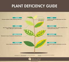 31 Disclosed Nutrient Deficiency Chart