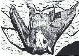 Pentekening Van Een Vleermuis Getekend Door Brigit Weeda