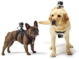 dog harness fetch adjustable chest strap mount belt for gopro hero 7 6 5 4 3 3 2 1 sjcam sj5 sj7 xiaomi yi 4k