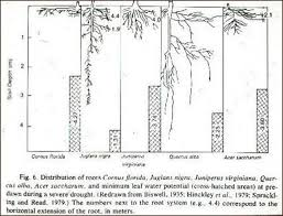 Tree Root Size Chart How Deep Do Tree Roots Grow Deeproot Blog