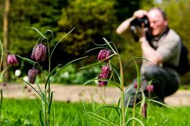 Small Picture Learn with courses and workshops held in the RHS Gardens RHS