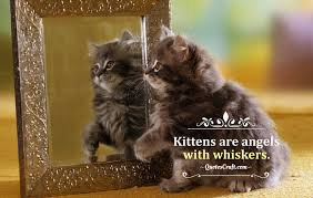 Kittens Are Angels Quotes About Cats About Cat Cat Quotes Quotescraft