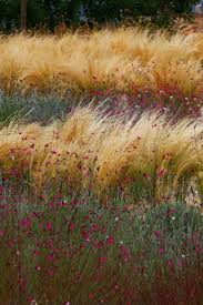 16 best images about Grass Ranges on Pinterest