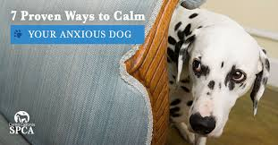 7 proven ways to calm your anxious dog