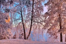 january winter background. Perfect Winter January Softness  January Beautiful Trees Softness Winter Cold Snow Intended Winter Background