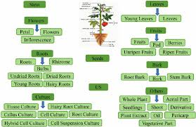 Classification Schema Followed To Categorize The Plant Part