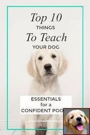 Dog Behavior Rubbing Face And Dog Behavior Chart Dog