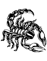 Small Picture Scorpion Line Art Coloring Page 26200 Bestofcoloringcom