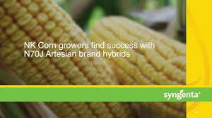 Nk Corn Seeds Syngenta Us