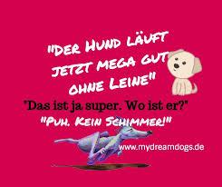 Hund Ohne Leine Spruch Mydreamdogs