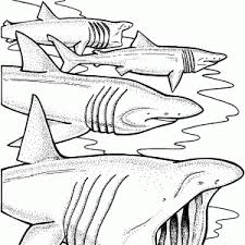 Small Picture Shark Coloring Pages adult