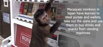 Interesting Facts About Vending Machines Magnificent More Interesting Facts Others