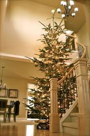 ... Amazing Ideas 15 Ft Christmas Tree Best 25 9ft Only On Pinterest  Traditional ...
