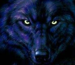 blue wolf background. Beautiful Wolf Wolves Images Blue Wolf Wallpaper And Background Photos On Background