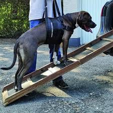 Damit sie nicht immer über das gitter hinweg steigen müssen, wenn sie die stelle passieren möchten, gibt es auch schutzgitter mit integrierter tür. Beppo Hundetragegurt Hunde Tragehilfe Dogs4friends De