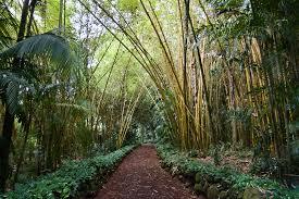 allerton gardens kauai photos. allerton gardens with garden kauai photos