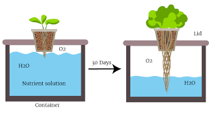 1 the passive bucket kratky method