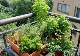 how to make an herb garden. Plain Herb Best Herbs For Balcony Garden 2b1b83cb2407dbf9c55cc3d3906f88ed  2b1b83cb2407dbf9c55cc3d3906f88ed To How Make An Herb Web