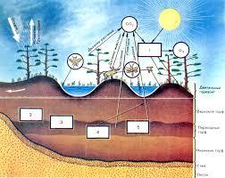 Скачать бесплатно реферат по биологии и естествознанию Реферат на тему биогеоценоз и экосистема