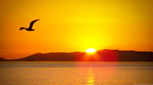Image result for picture of sun rising