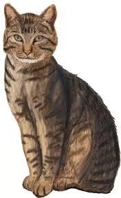realistic cat drawing in pencil. Brilliant Pencil How To Draw Realistic Cats Step By To Cat Drawing In Pencil R