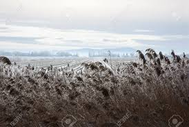 dry grass field background. Snow Field With Dry Grass Blades On Hill Background Stock Photo - 12678071
