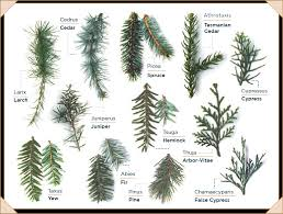 Tree Identification Guide Tree Types Id Trees By Leaf