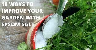 swinging epsom salts garden salt in garden quantity salts gardenias salt in garden epsom salts garden australia