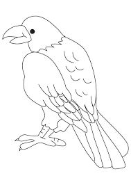 Small Picture Bird of prey coloring page Download Free Bird of prey coloring