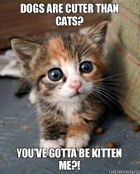 animal lover on Pinterest | Kittens, Funny pictures and Funny Animal via Relatably.com