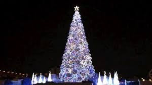 World's Best Christmas Tree listed in The Guiness Book of Records ...