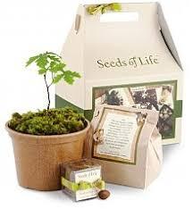 home decor seeds of life oak tree kit