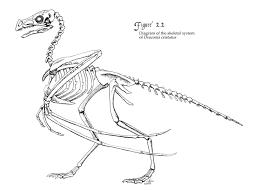 6 pin trailer wiring diagram 6 discover your wiring diagram raven skeleton diagram