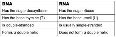 3 5 Transcription And Translation Bioninja