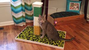 diy cat scratch post you