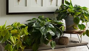 indoor plants for low light some of the most colorful and easy care