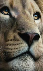 Absolutely Beautiful Lion Zvířata Velké Kočky Kočka Legrační