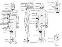 Marma Chart Marma Point Therapy Chart Our Treatment