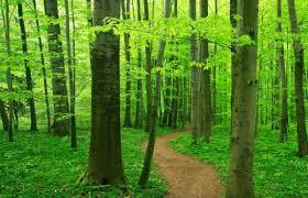 Ecology And Community Ecoliteracy Org