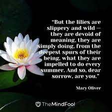 lily flower meaning lily symbolism