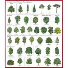 Tree Identification Chart 73 Proper Tree Leaf Chart